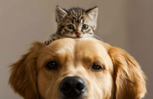 cat-and-dog-friends-001-700x454
